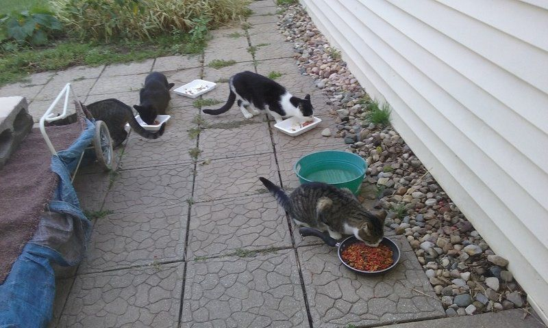 HELPING HANDS: Goshen nonprofit neuters, cares for feral cats