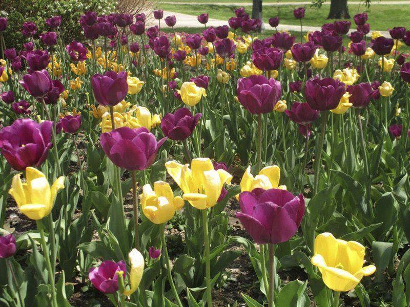 Wellfield Botanic Gardens celebrates National Public Garden Day with ...
