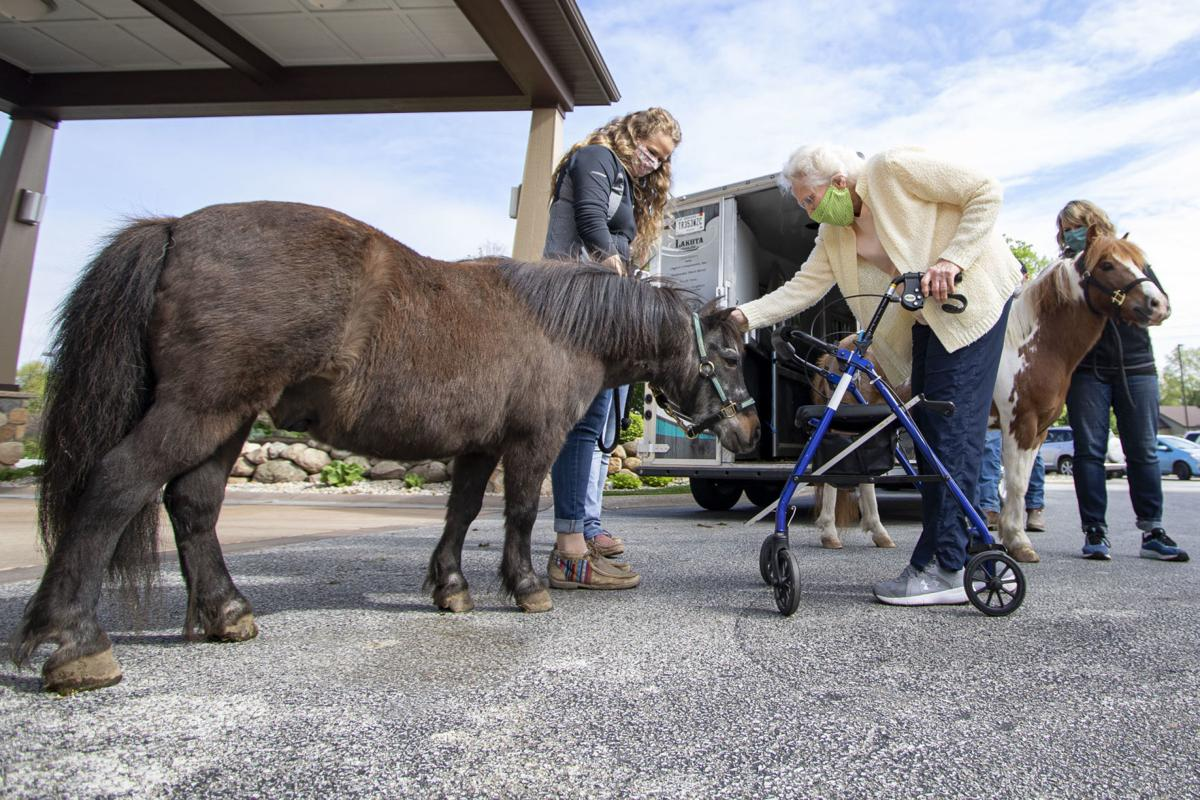 LoveWay Mini Horses bring Cheers to Residents at Hubbard Hill Living Wisdom Community