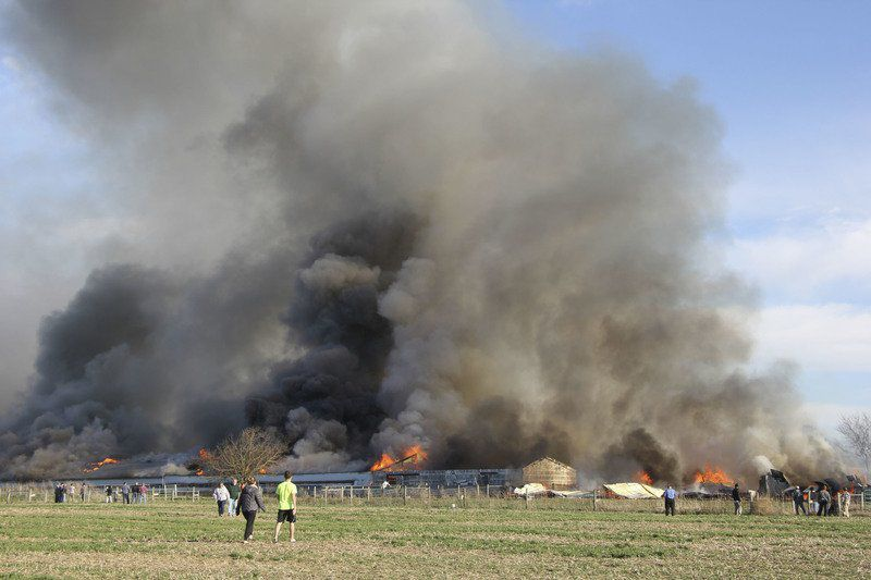 Duck barn destroyed by fire
