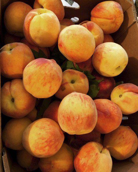 LA BONNE VIE: Summer fruit canned, ready for winter