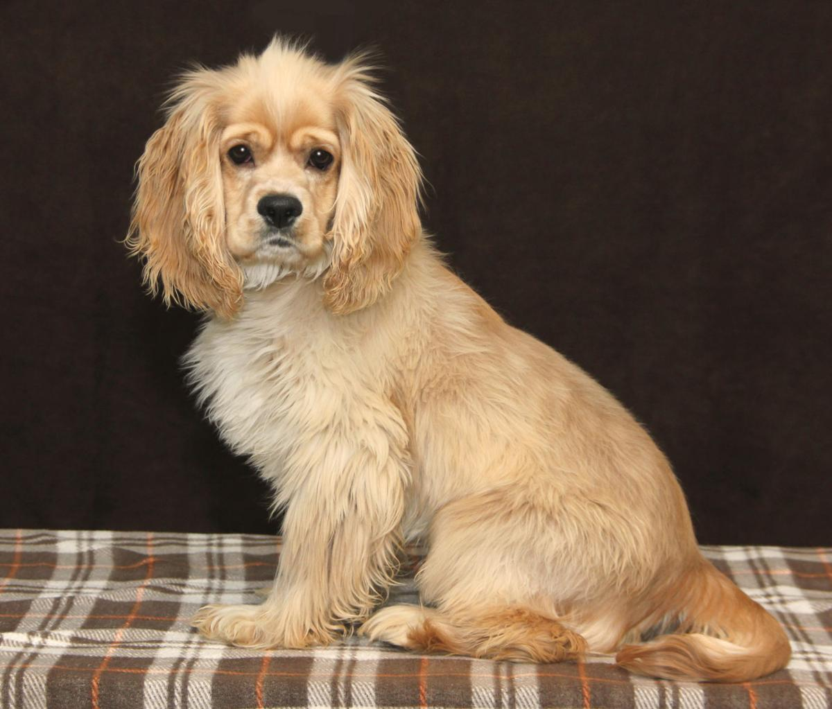 SLIDESHOW: Pets of the Week   Local News   goshennews com