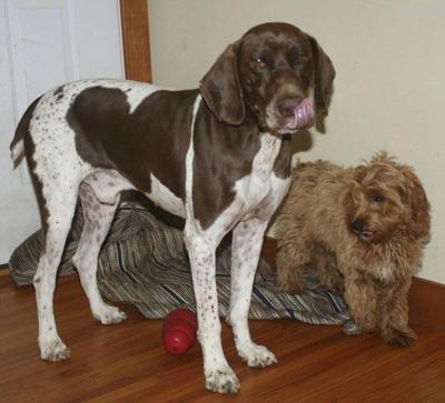 BLOGSPOT: Every day is Dog Day