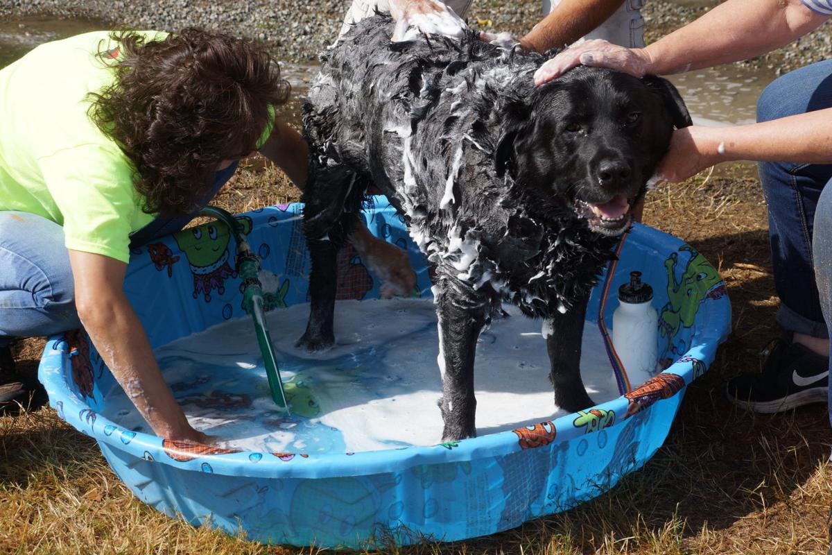 dog wash - happy Lab.jpg