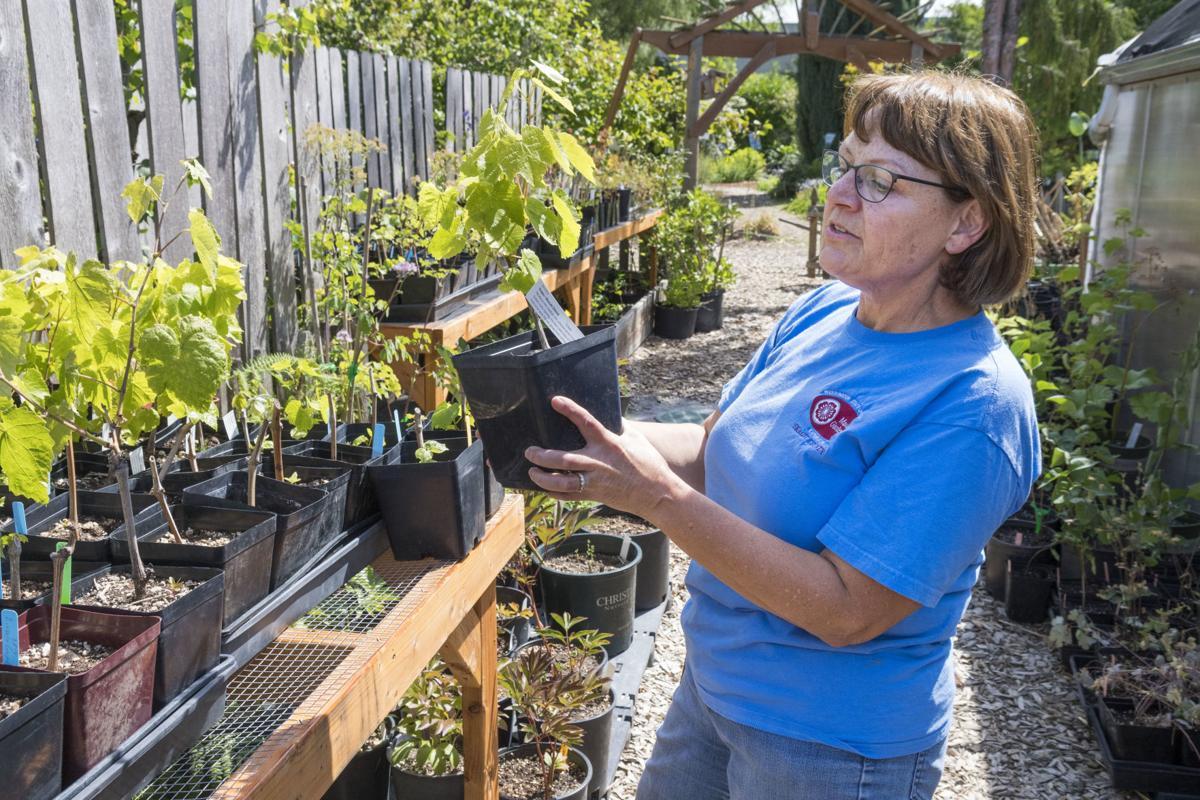 WSU Discover Garden Master Gardeners