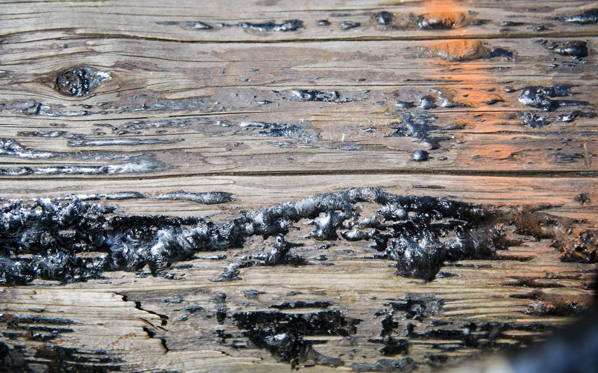 Elger Bay creosote removal, 5.11.21
