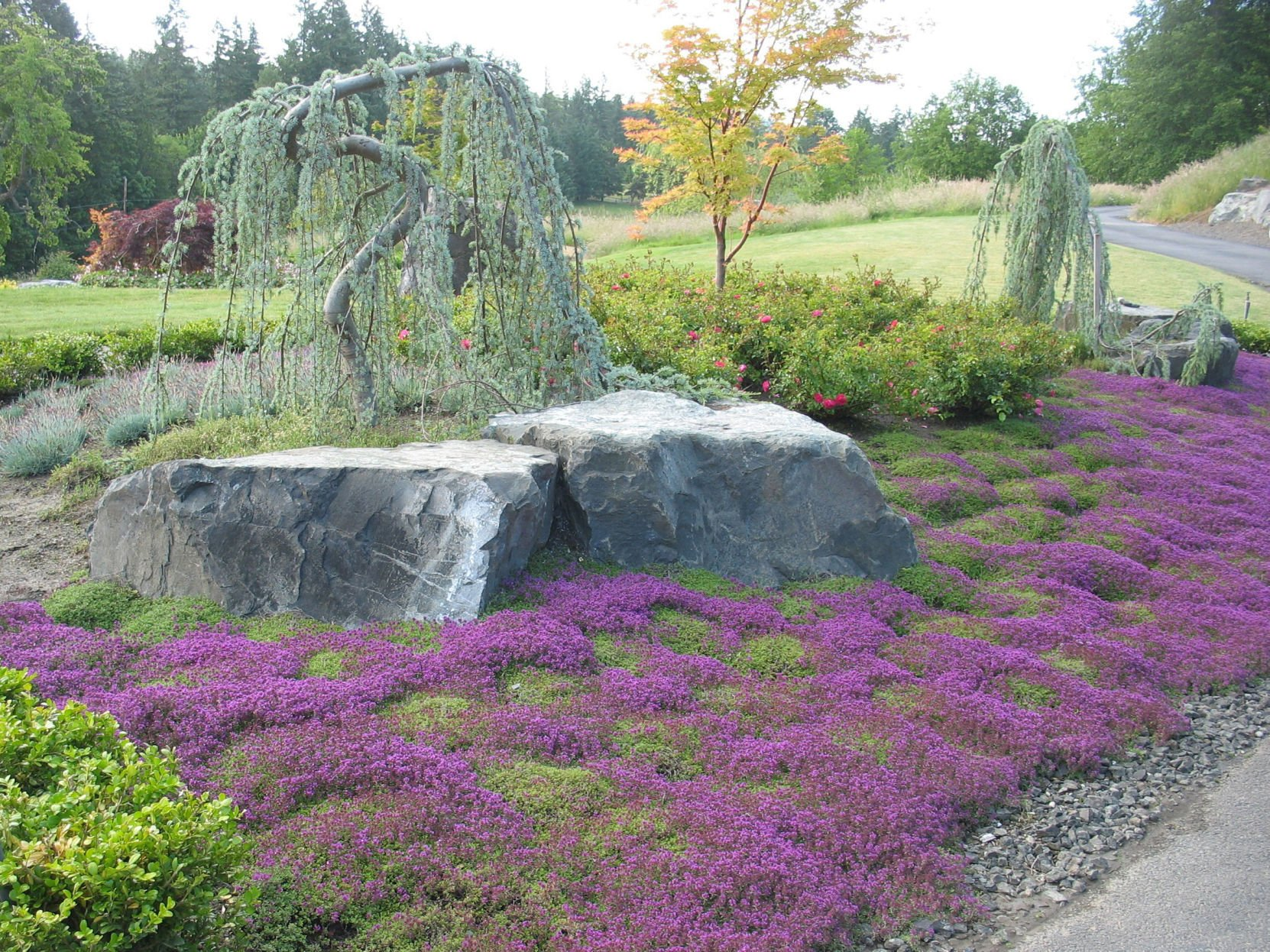 Drought Tolerant Garden 2