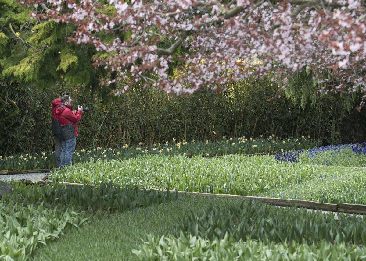 Tulip Growers see Spring 04