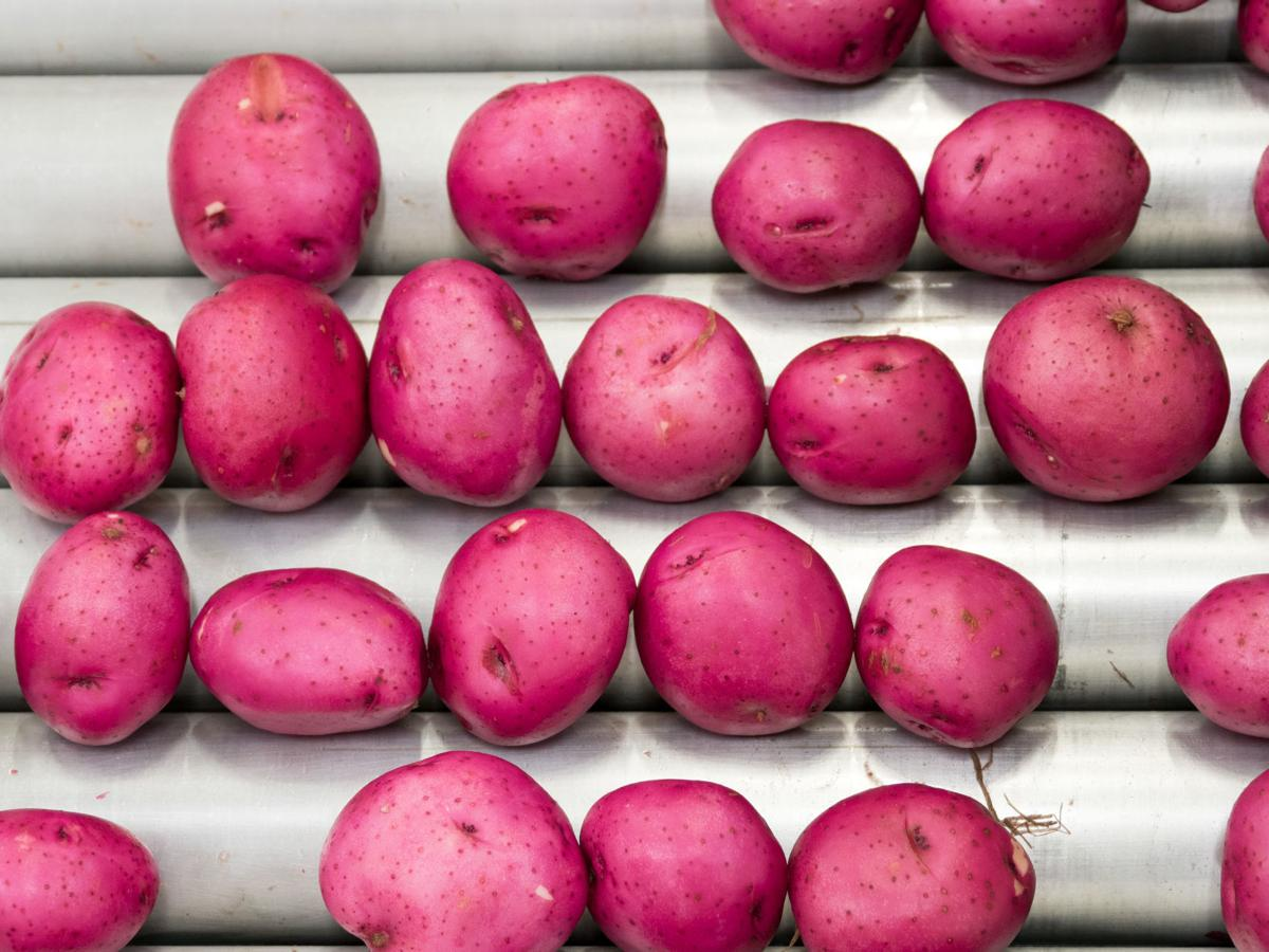 Skagit Valley Farm potatoes