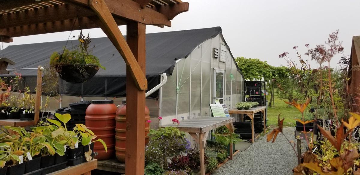 Gable_Roof Greenhouse_H.Davies.jpg