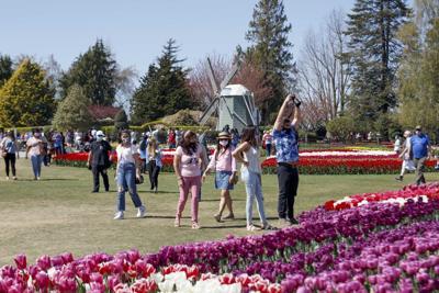 Tulip crowds