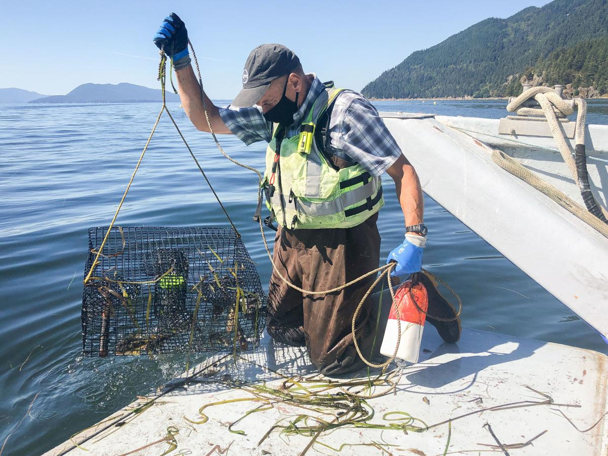 Search for green crab