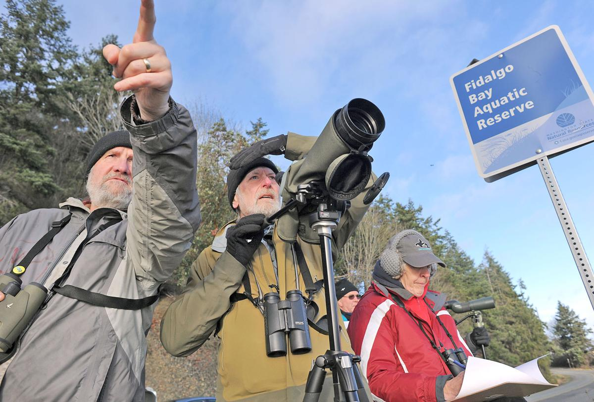 New survey documents Fidalgo Bay birds