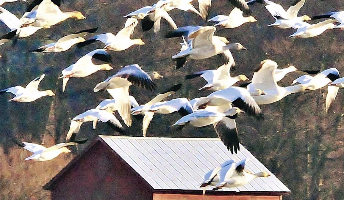 Birding festival set to take flight