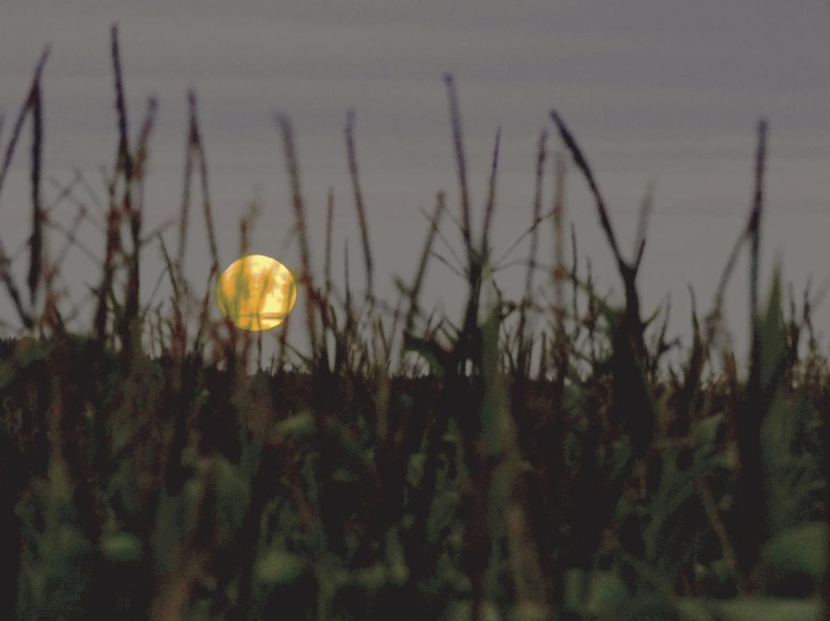 Harvest moon by Richard Raisler