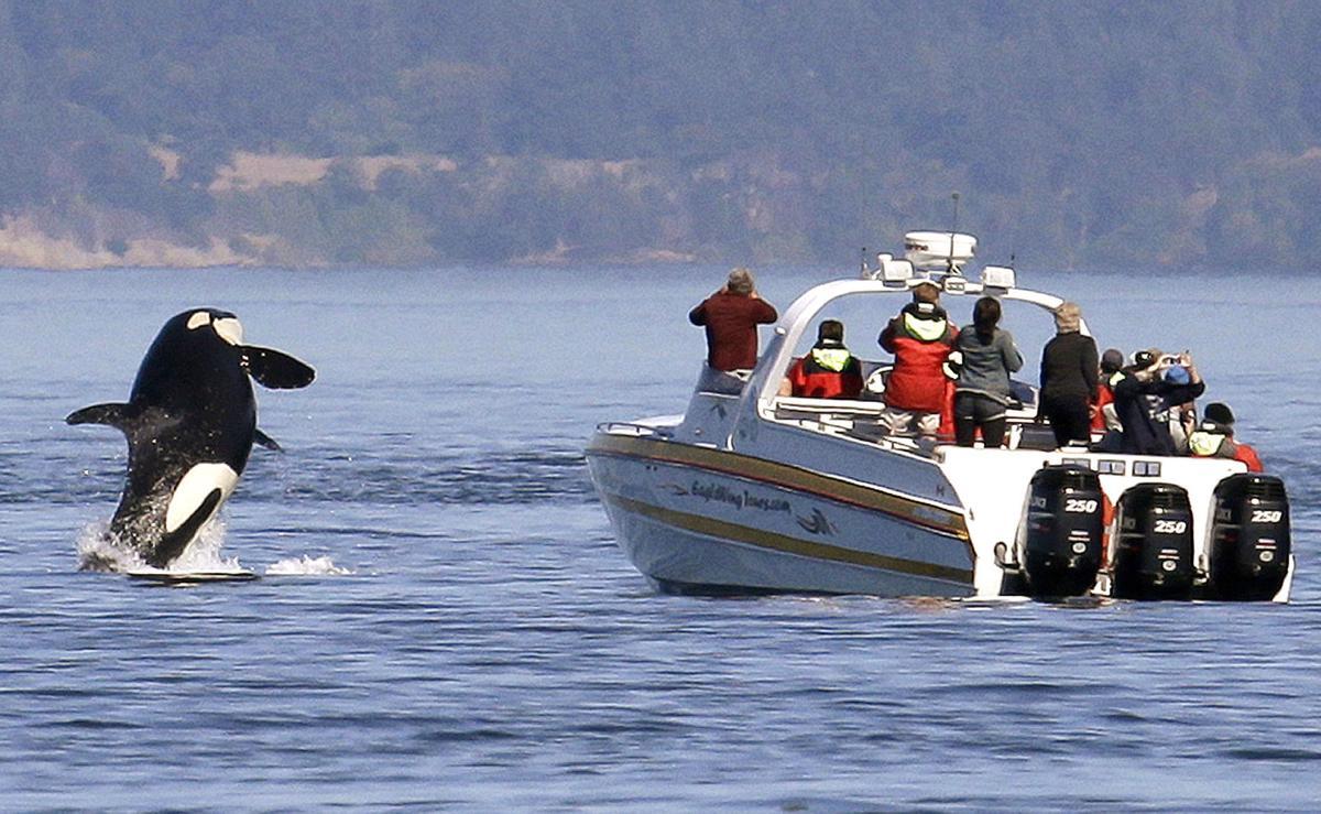 Orca Lawsuit