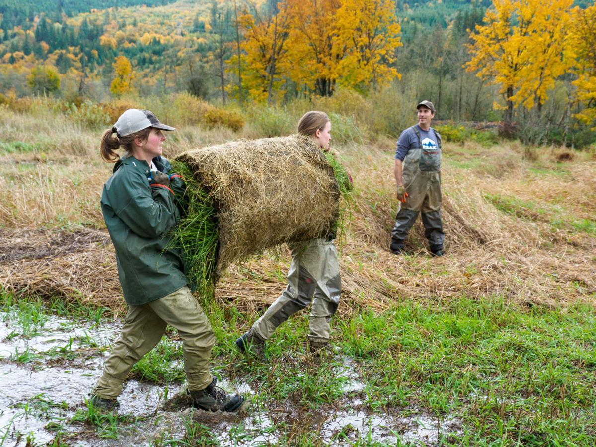 Oregon Spotted Frog habitat restoration