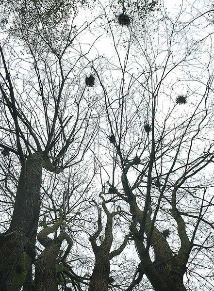 New camera coming for March Point heron rookery