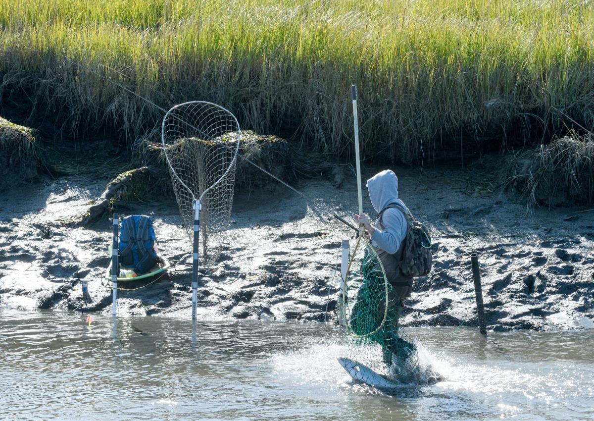 Samish River Fishery