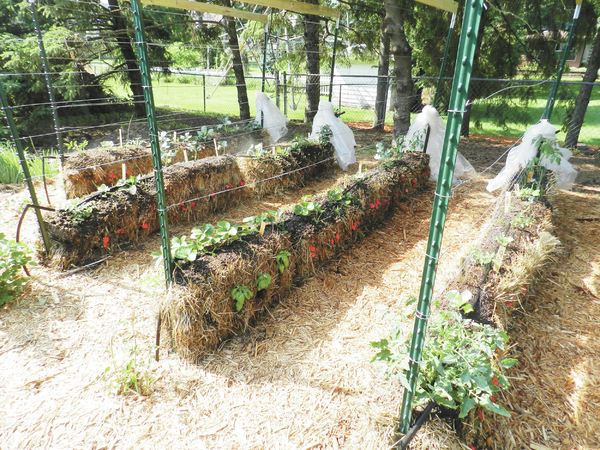 Growing plants in straw bales all access for Best plants for straw bale gardening