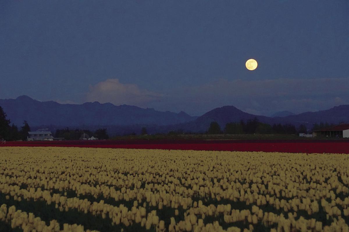 Super Moon over tulip fields by Richard Raisler