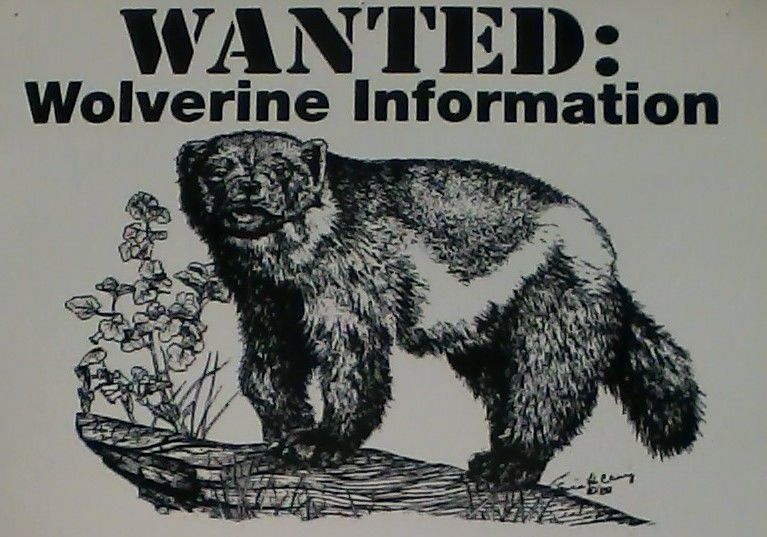 Wolverine research poster