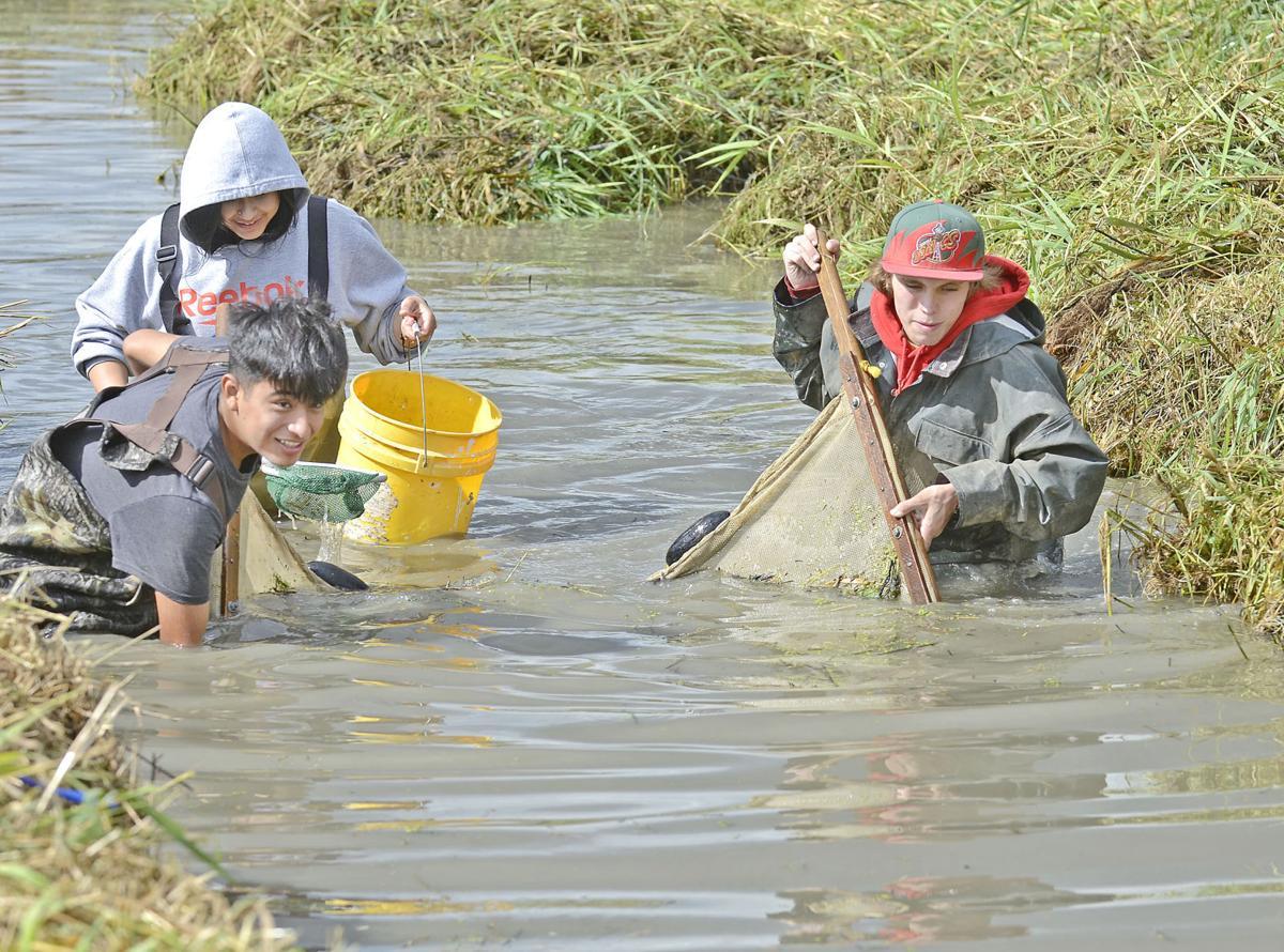 Restoring the flow of Trumpeter Creek