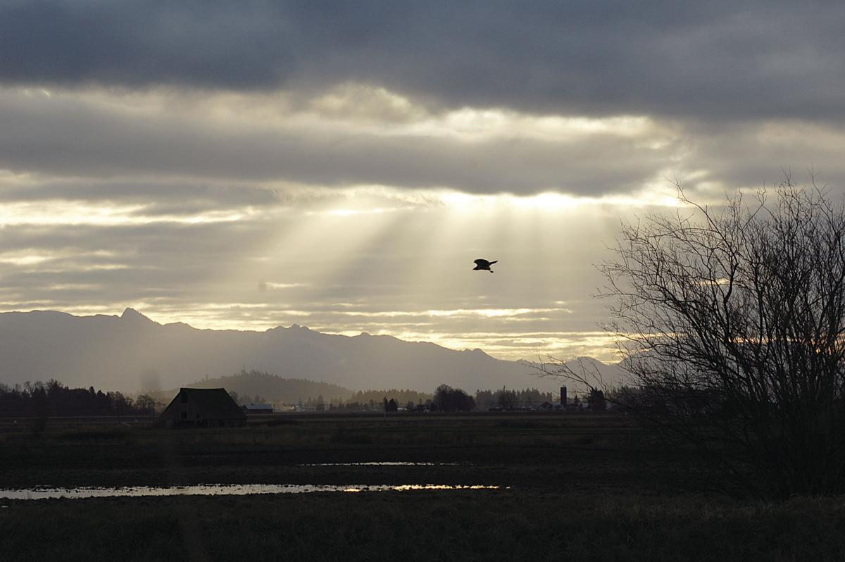 Hawks light over the Samish Valley by Tom Plank