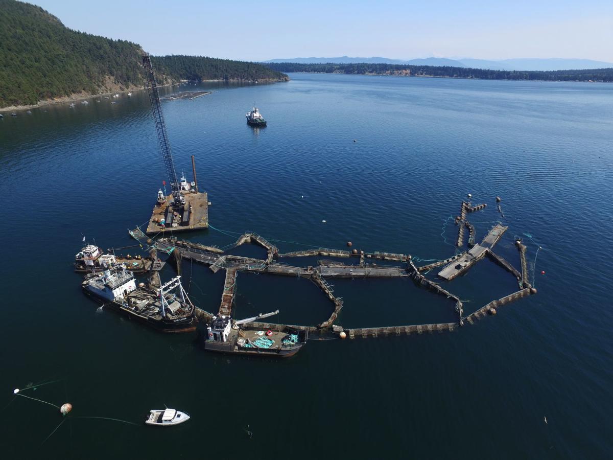 Atlantic Salmon Farming Ban
