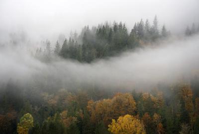 Forest shutterstock