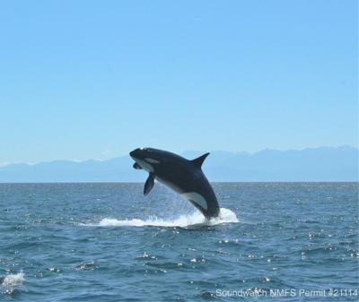 New whale tour company regulations to take effect