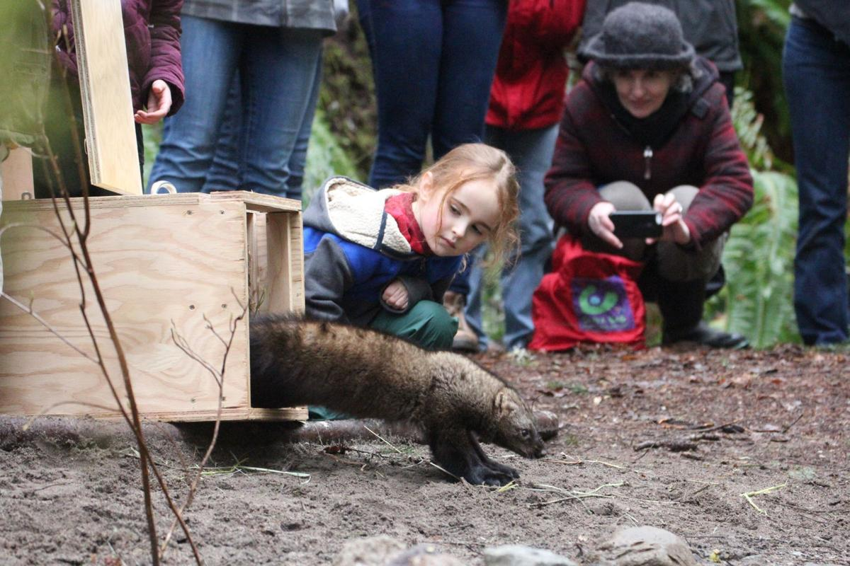 Plan to bring fishers to North Cascades delayed