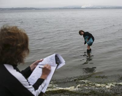 No single source found for Bay View pollution