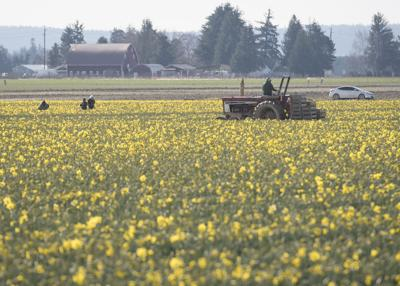 Overtime for farm workers