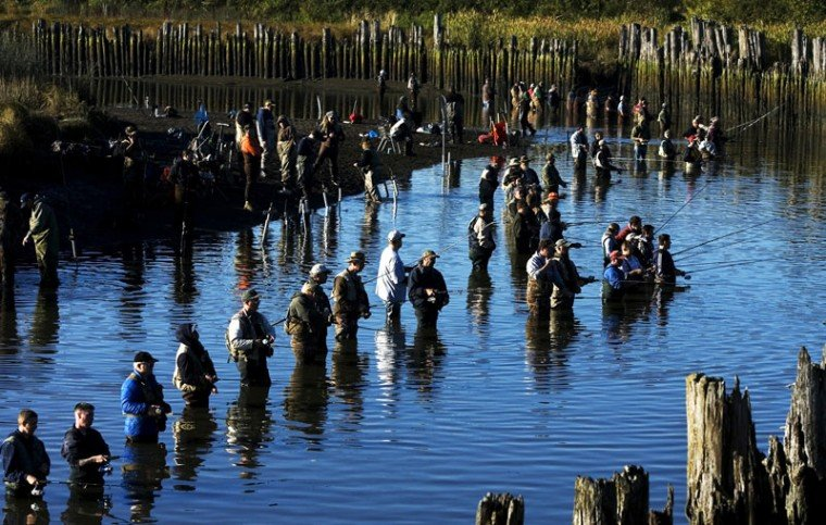 Fishing to close on the samish river news for Puyallup river fishing