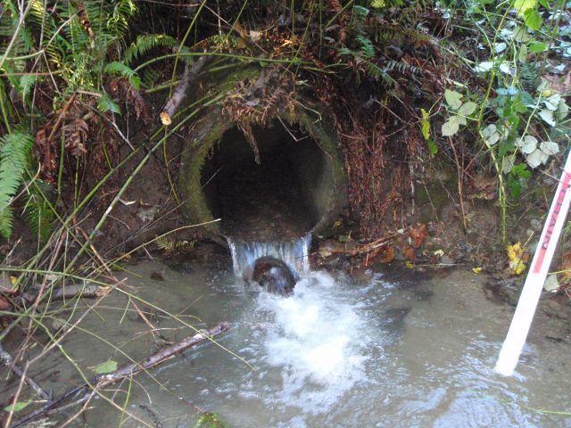 Lorenzan Creek culvert.jpg