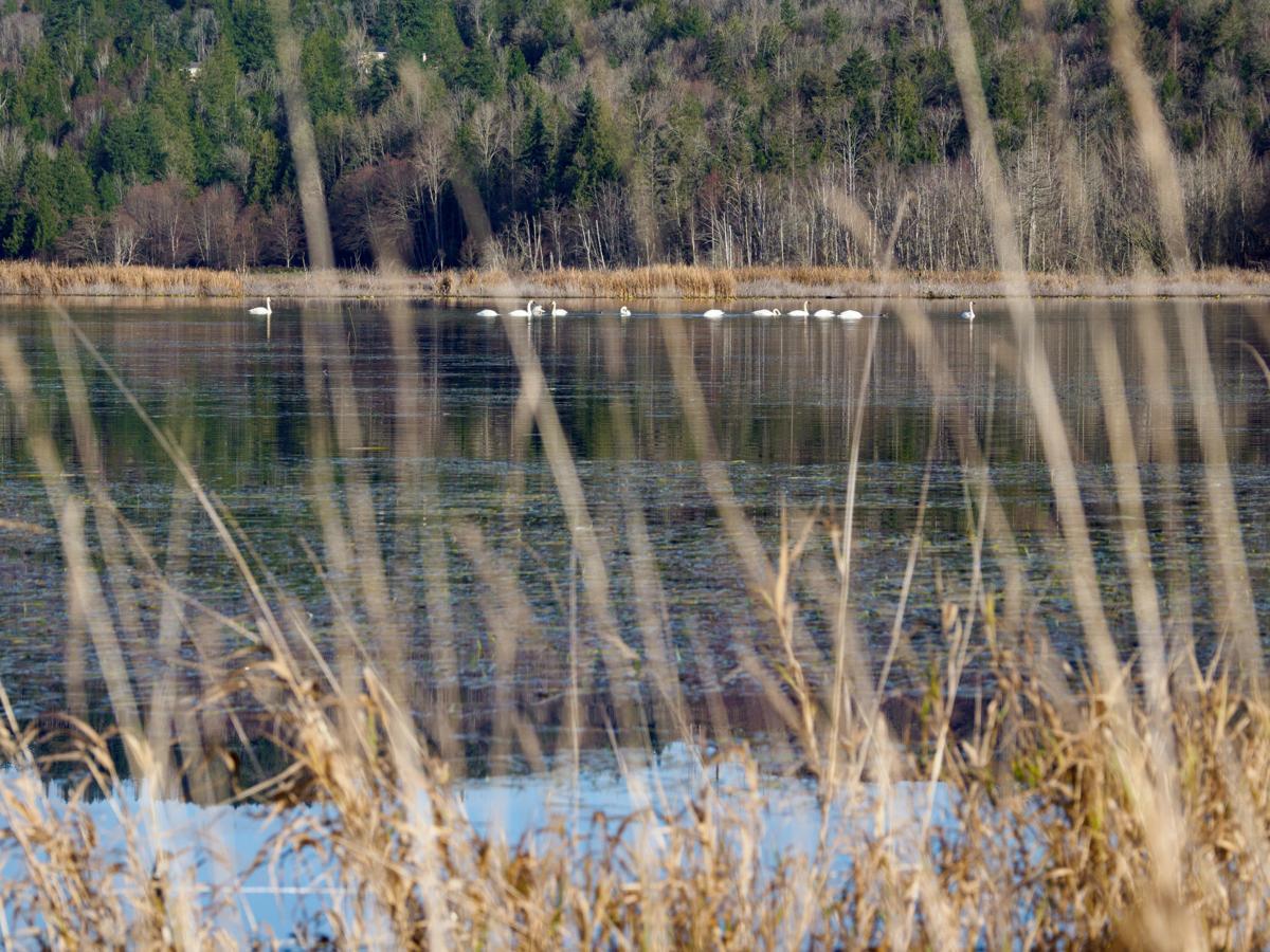 Skagit River Tributaries
