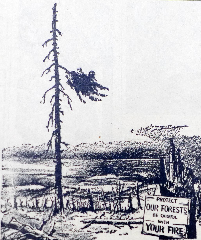1941 7-24 Forest fires.psd
