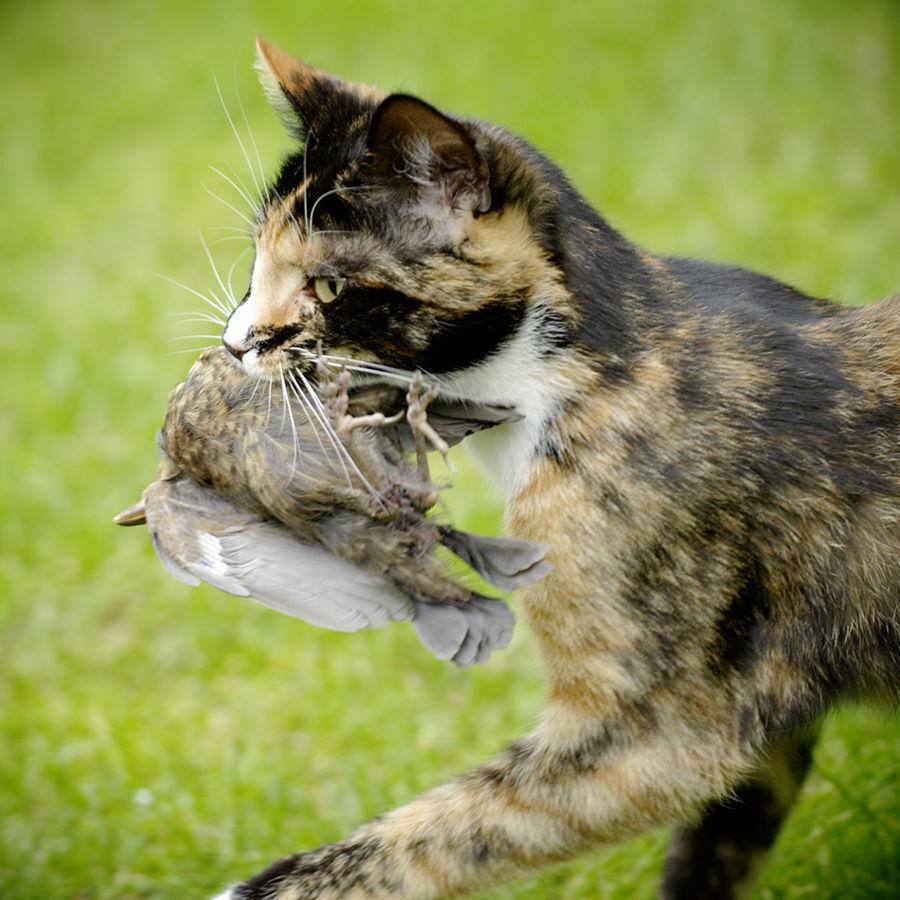 cat with bird by mfrissen.jpg