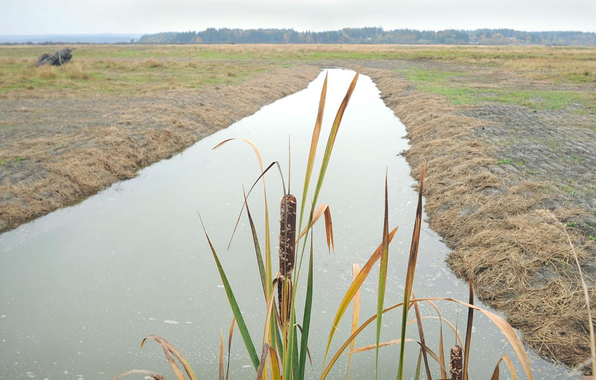 Skagit Wildlife Area's Leque Island reopens to public