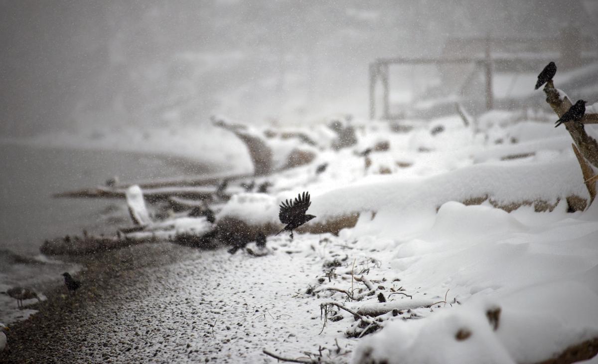 Snow day, 2.13.21
