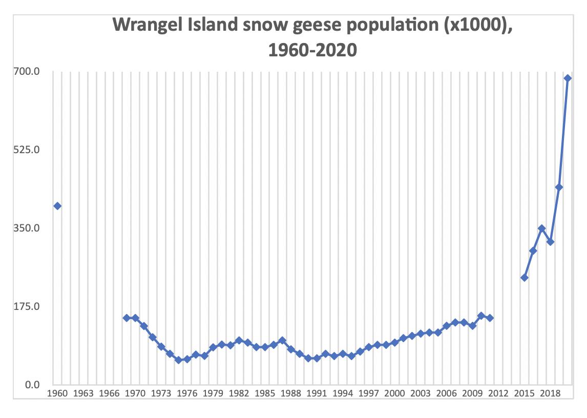 Snow goose population on Wrangel Island since 1970