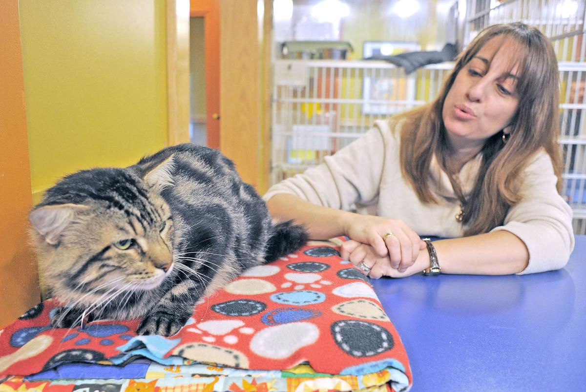 Stanwood animal shelter takes in Texas cats | Local News ...