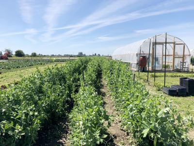 Viva Farms file