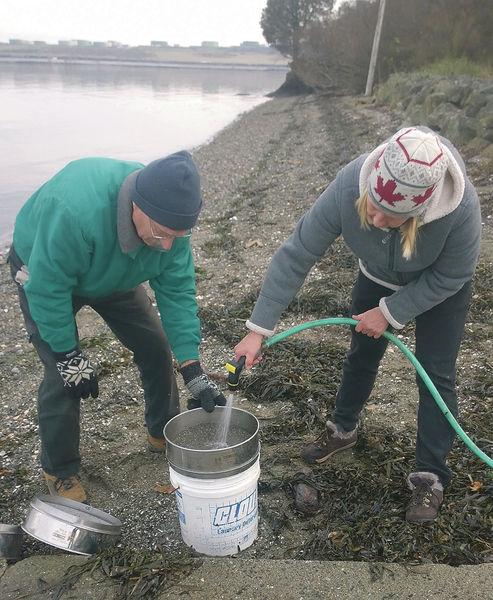 Volunteers document Fidalgo Bay surf smelt