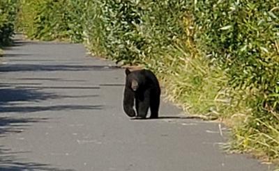 Mount Vernon Bear