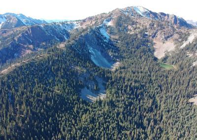 Silverdaisy mountain