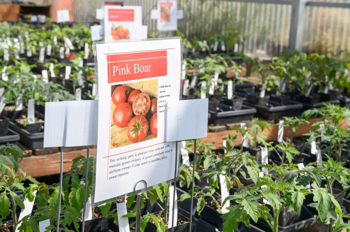 Azusa Farm and Gardens buys mater garderner tomatoes