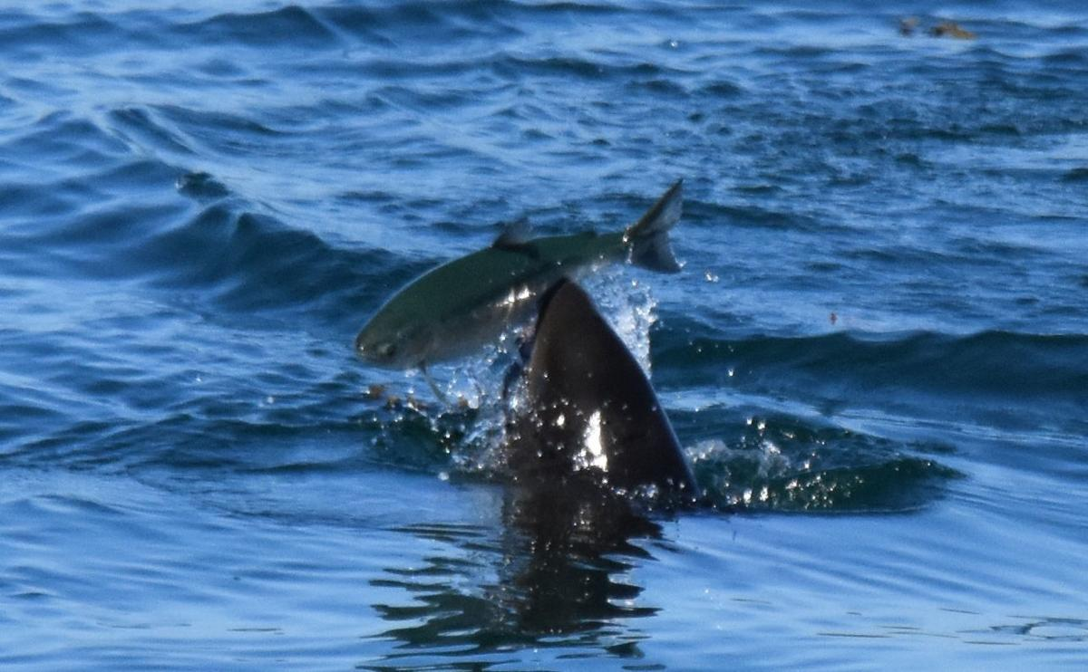 72519_porpoise fish catch 2_cropped.jpg
