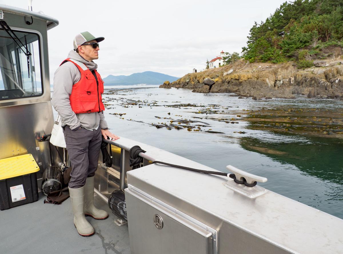 Salish Sea Bull Kelp